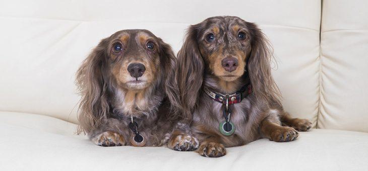 ペットと一緒の家族写真