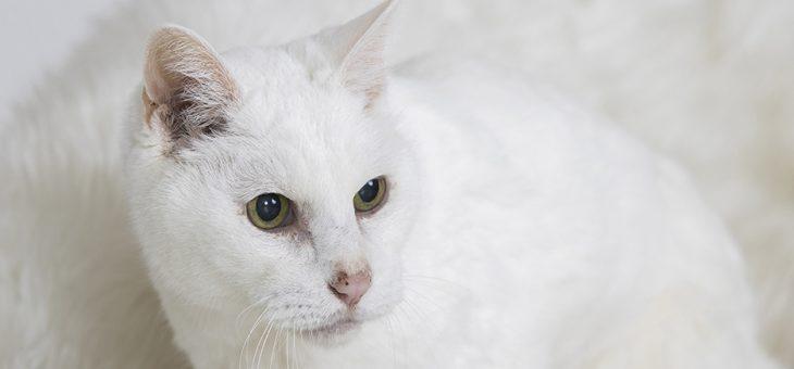 20歳のシニア猫ちゃんのポートレート